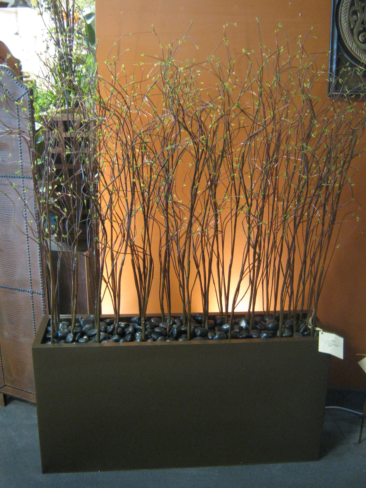 Plant Willow in 39inch bronze planter box 5\'H · Home Decorating ...